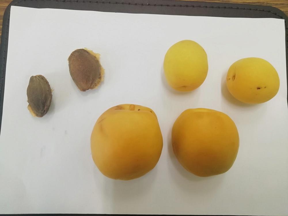 Косточки и плоды новой формы